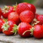 【K泥棒】 韓国さん、日本のイチゴを無断で掛け合わせて作った品種を「ウリナラ起源」にし始める