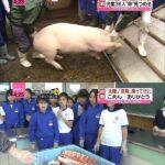 150日間自分達で育てた豚が肉になった瞬間を見た子供の顔(画像あり)