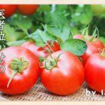 【朗報】医者「トマト、マジ最強」  お前らはもう食ってるよな?