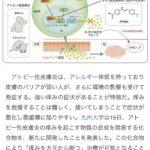 アトピーのかゆみを大元から断つ化合物を開発 九州大学 ノーベル賞(画像あり)