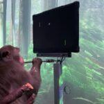 イーロンマスク 脳にチップを埋め込み思考だけでゲームをする猿の映像が公開(動画あり)