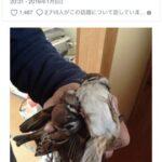 ズズメを狩って 丸焼きにして食べた 日本男 合法(画像あり)