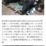 熊の胆嚢の担汁を採る工場がある 中国(画像あり)