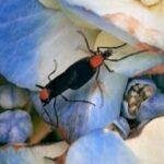 【動画あり】沖縄で「交尾虫」が大量発生