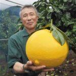 【速報】熊本でとんでもないミカンが収穫されギネス認定!!