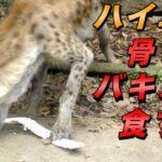 中国人「なぜ日本人は骨付き肉を食べないの?骨の周りの肉が一番美味しいのに…」  [668024367]