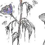 【悲報】反日アサガオ、五輪前日に枯れやがり撤去される  [118128113]