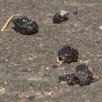 五輪 自転車競技で使われる都道にアスファルト粒が散乱しているのが見つかる 警視庁調査 パヨテロか  [135853815]