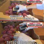 韓国五輪選手団に提供の「放射能フリー弁当」、その測定方法が間違っていた模様  [439992976]