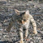 【グロ注意】 獰猛な動物の群れに襲われ、ズタズタに噛みつかれる猫動画  [765575576]