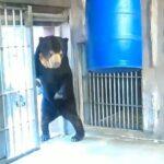 動物園のクマ あきらかにオッサンの着ぐるみだと話題に  [841987188]