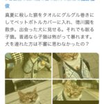 ネコを泳がせる動画をインスタに 動物愛護法違反容疑で逮捕  [241859604]